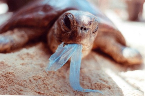 a-turtle-at-the-mercy-of-a-plastic-carrier-bag