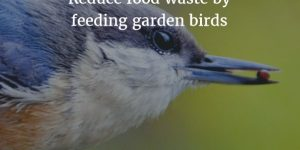 Garden birds + food scraps = Zero Waste!